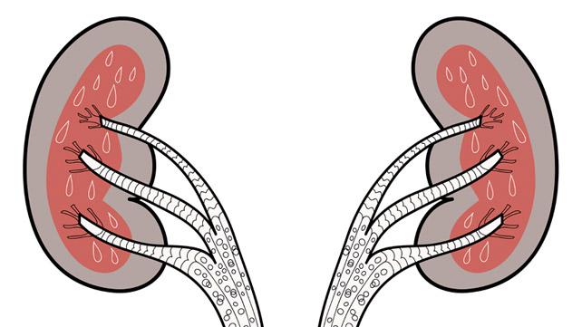 Kidney Drug