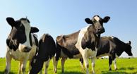 Livestock and MRSA