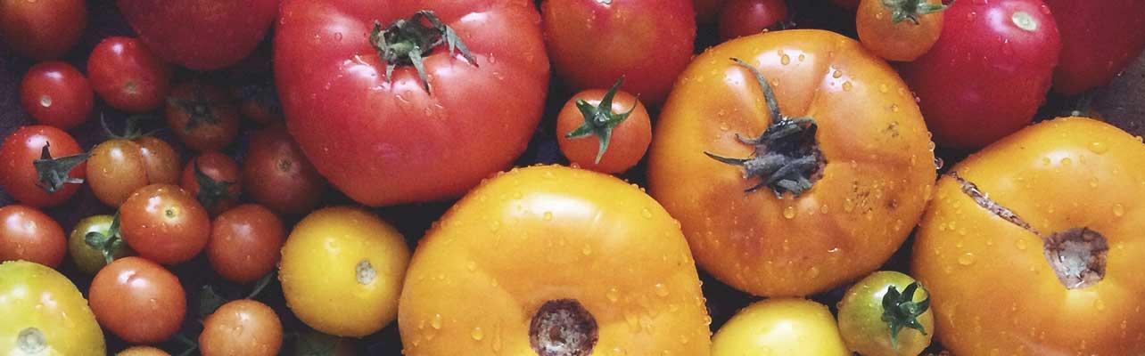 Nutritious Nightshade Plants