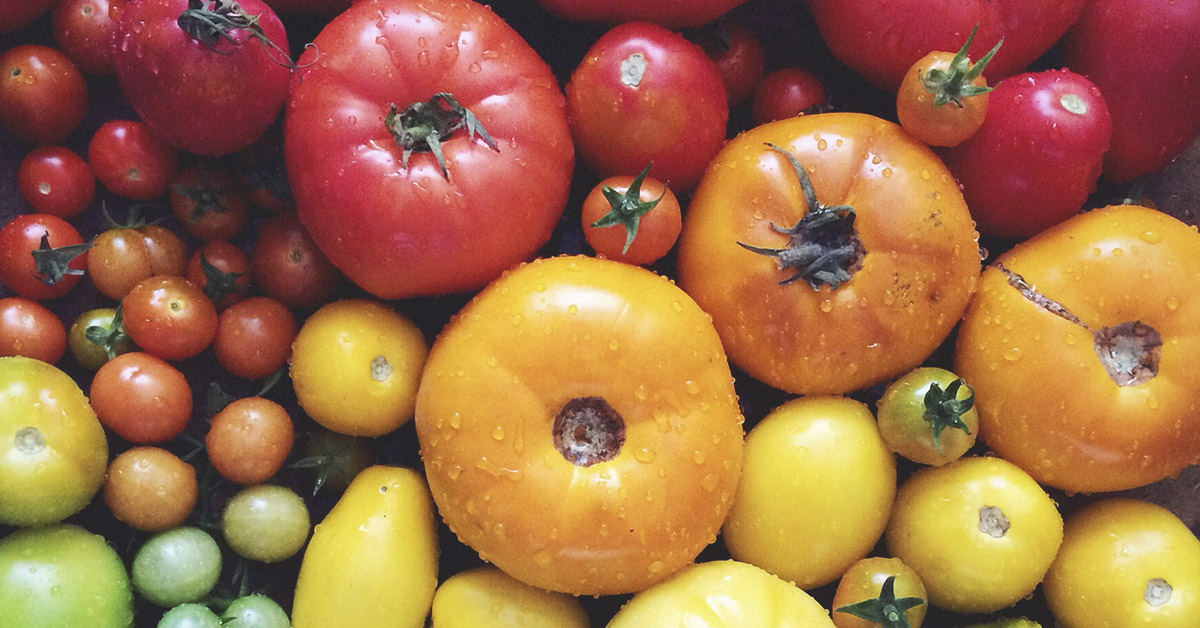 Nutritious Nightshade Plants: Tomatoes, Potatoes, and More