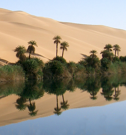 view of an oasis