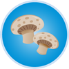 Eat mushrooms to prevent colds and flu