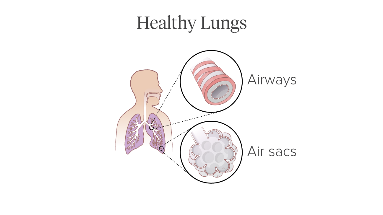 healthy lung illustration