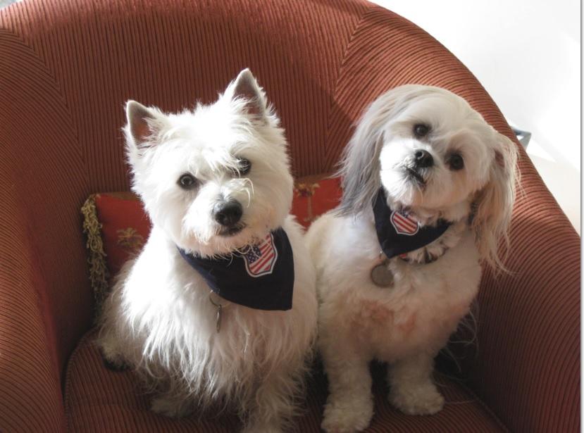 Milo Dogs
