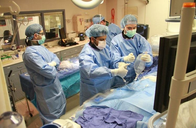 lset Cell Transplantation