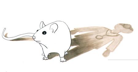 mice and human studies