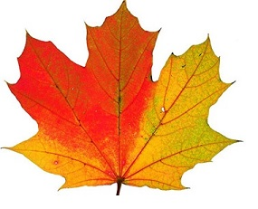 Fall Foilage Leaf Icon