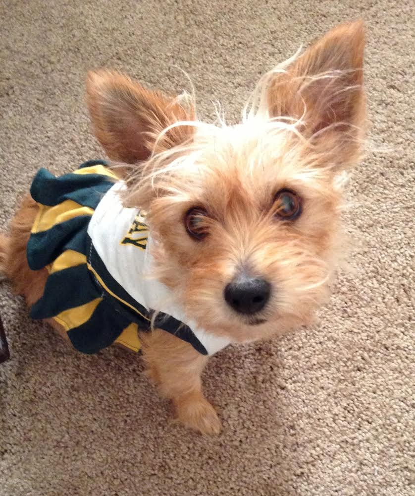Irina Dog in Packers Cheerleading Outfit
