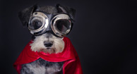 dog wearing goggles and cape