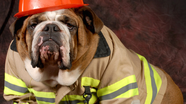 dog in fireman outfit