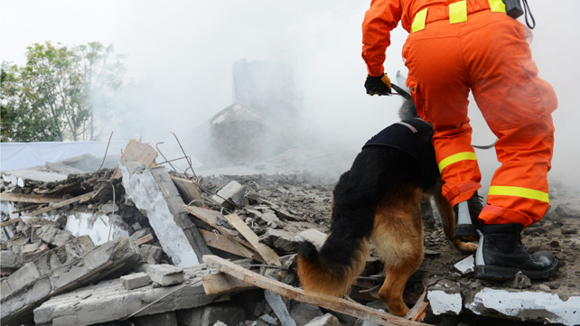 dog in earthquake wreckage
