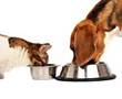 A dog and a cat eat from their bowls.
