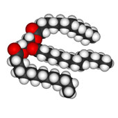 model of a triglyceride compound || model of a triglyceride compound