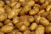 Superfood: the potato.