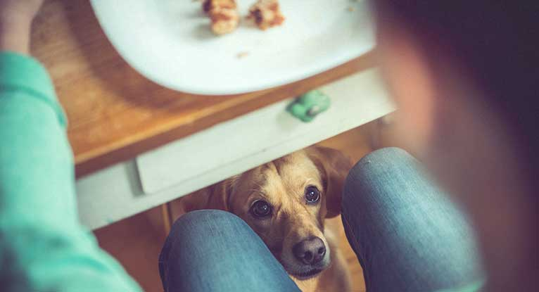 human food bad for dogs