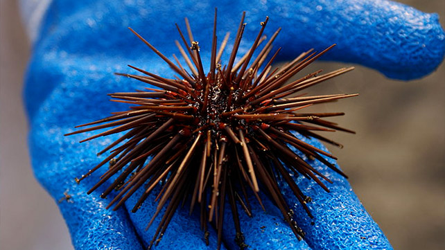 languagehatcom  Urchin