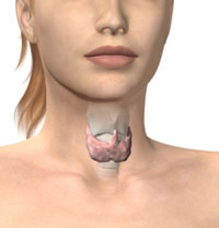 An image depicting the thyroid gland.
