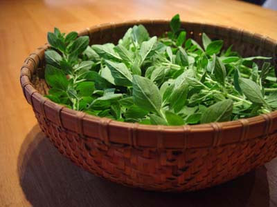 A bowl of fresh oregano