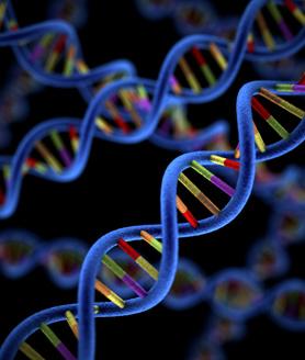 genetic causes of autism pdf