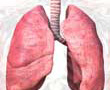 lung illustration