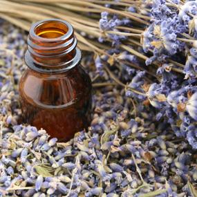 head lice essential oils lavender