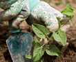 gloved hands gardening