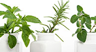 Herbs the Word: Help for Overactive Bladder