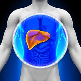 Obat Herbal Hepatitis C