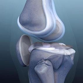 illustration-knee-bone