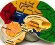 brain region model