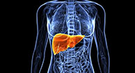 Learn the Effects of Hepatitis C on the Body