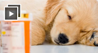 puppy sleeping next to medicine bottles