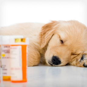 A dog sleeps next to pills.