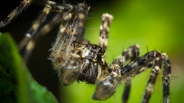 Spider Bites: Identify What Bit You and Get Proper Help