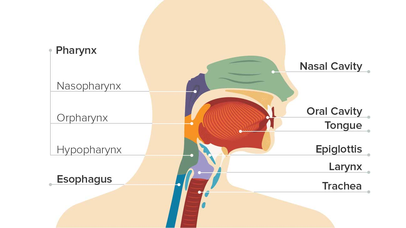 Throat Cancer Causes Symptoms And Diagnosis