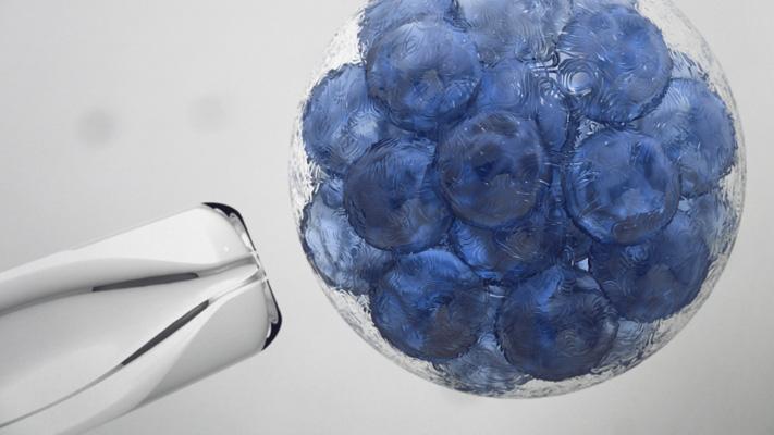 stem cell growth