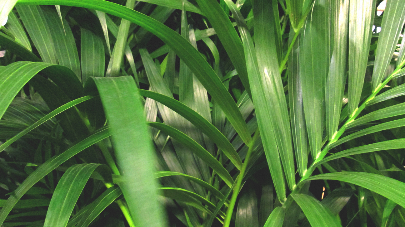 The best air purifying plants - Good house plant ...