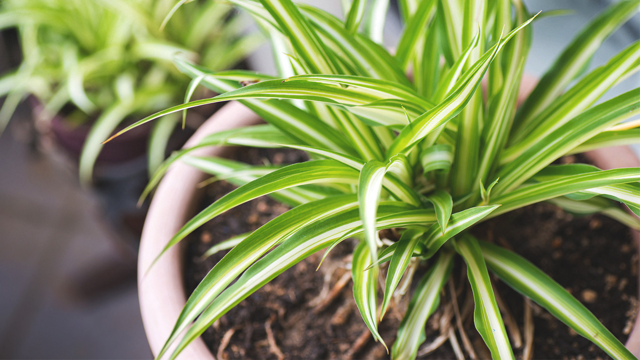 The best air purifying plants for Best no maintenance plants