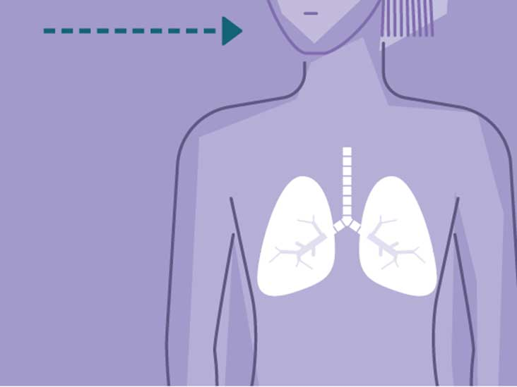 How Do The Lungs Work