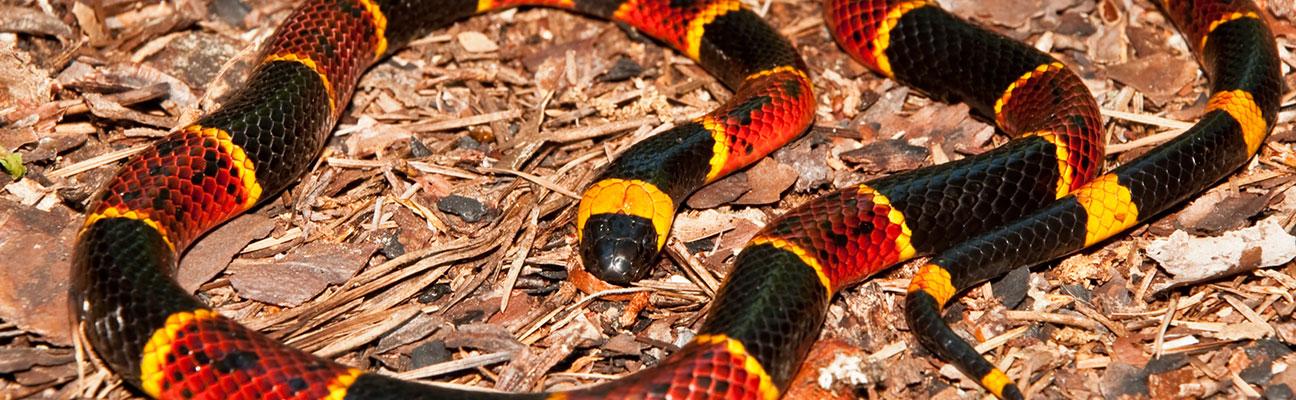 venomous snakes in india pdf download