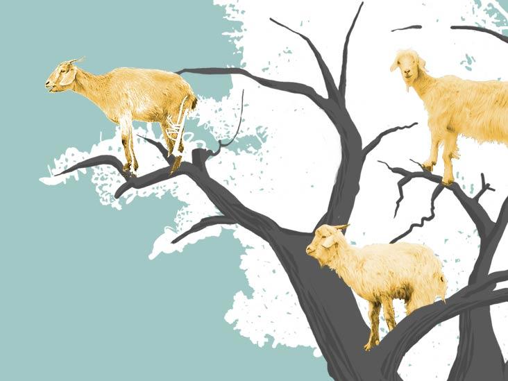 8314 benefits of goat milk 732x549 thumbnail