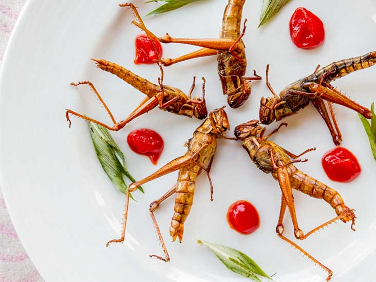 Edible Insects Superfood Diet