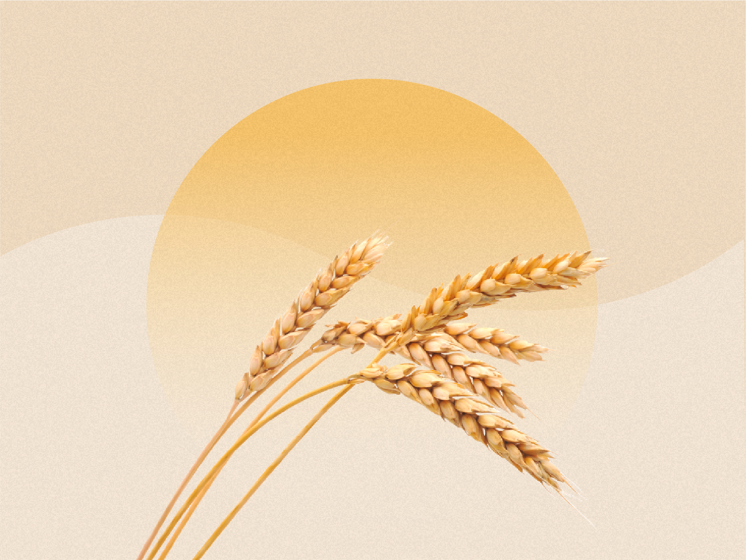 From Bulgar to Quinoa: What Grain Is Right for Your Diet?