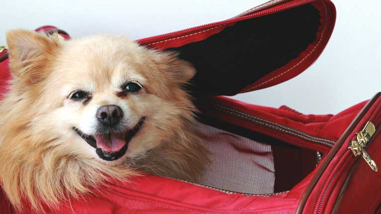8 ways people allergic to dogs can make their flights less for Best airline to fly dogs