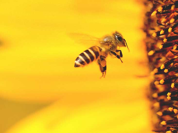 8 benefits of bee pollen nutrition facts and more