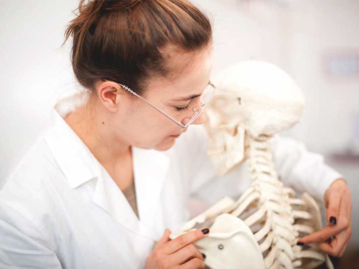 15 Fun Facts About the Skeletal System