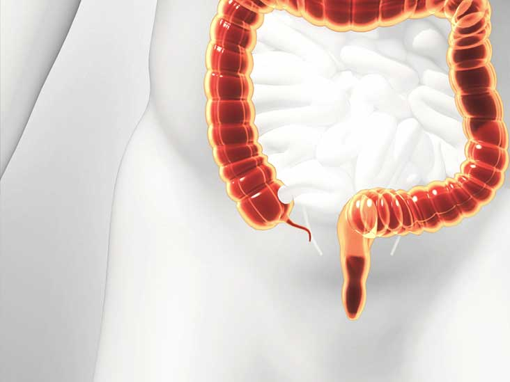 what does the appendix do?, Human body