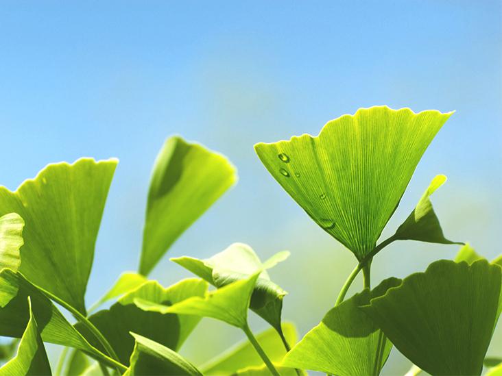 Ginkgo Biloba: Health Benefits and Uses