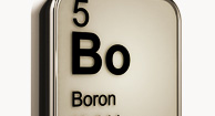 Brains, Bones, and Boron