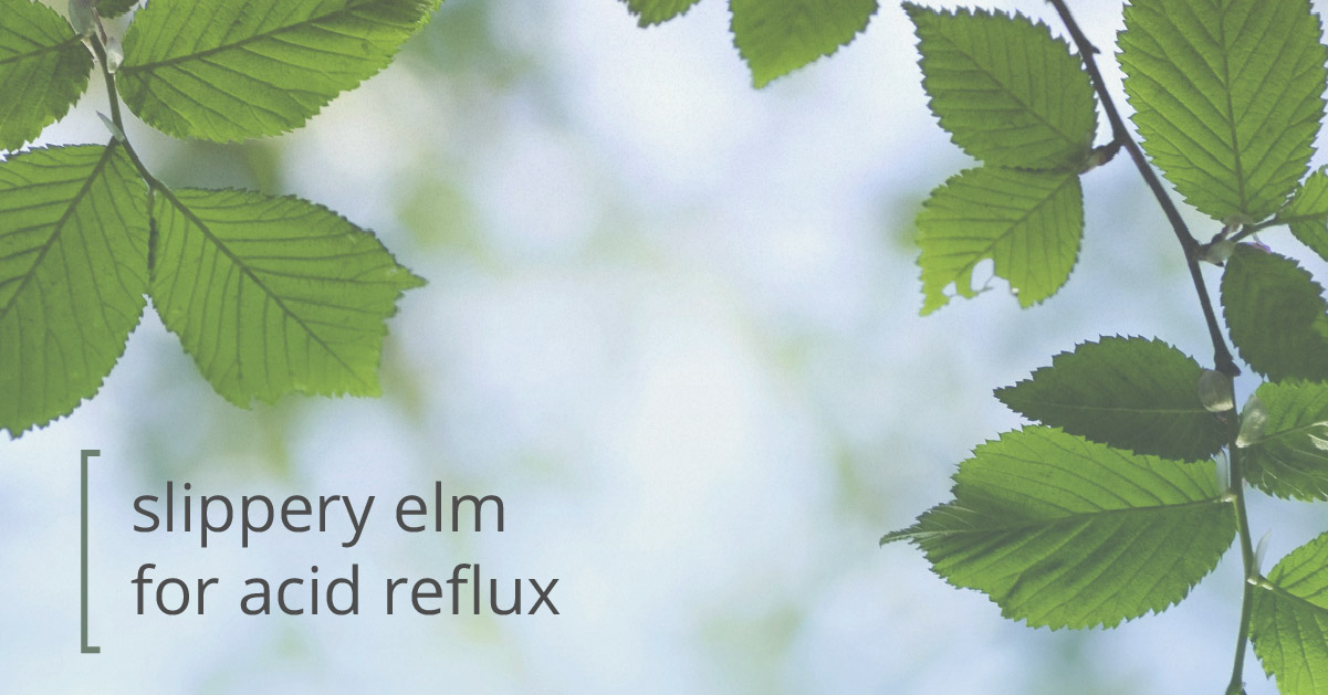 Slippery elm and acid reflux
